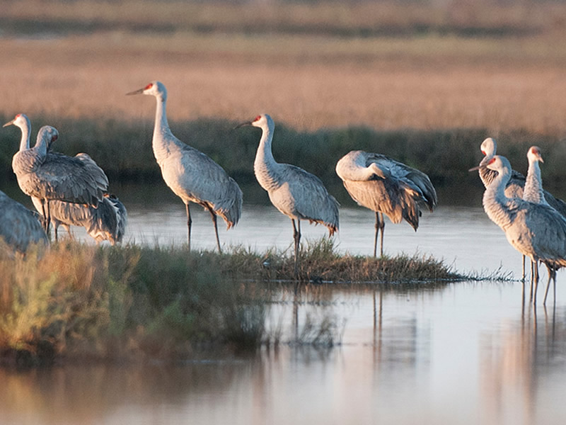 Holidays With The Cranes