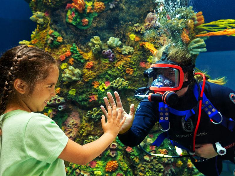Moody Gardens Aquarium - Diver and Child