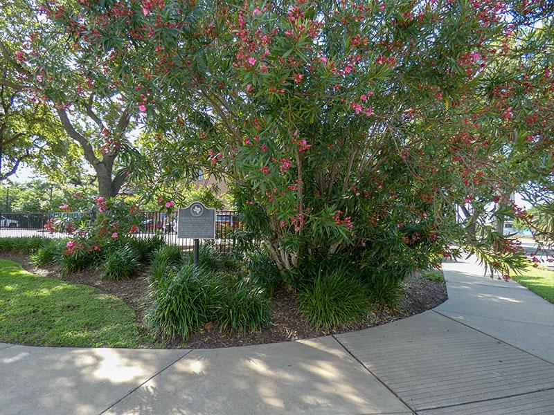 Original Oleander Planting in Galveston Historical Marker
