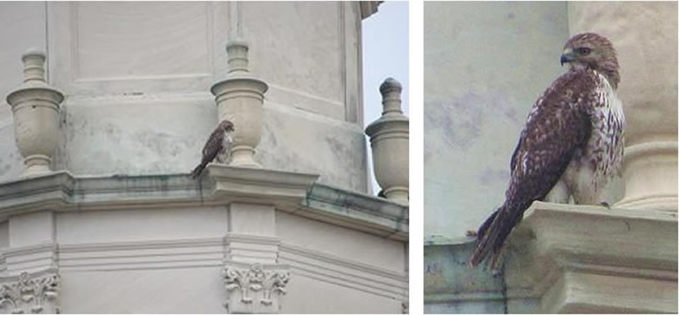 Urban Birding In Downtown Galveston