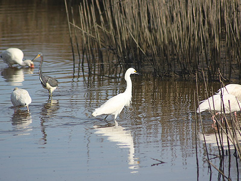 moody-gardens-shore-birds