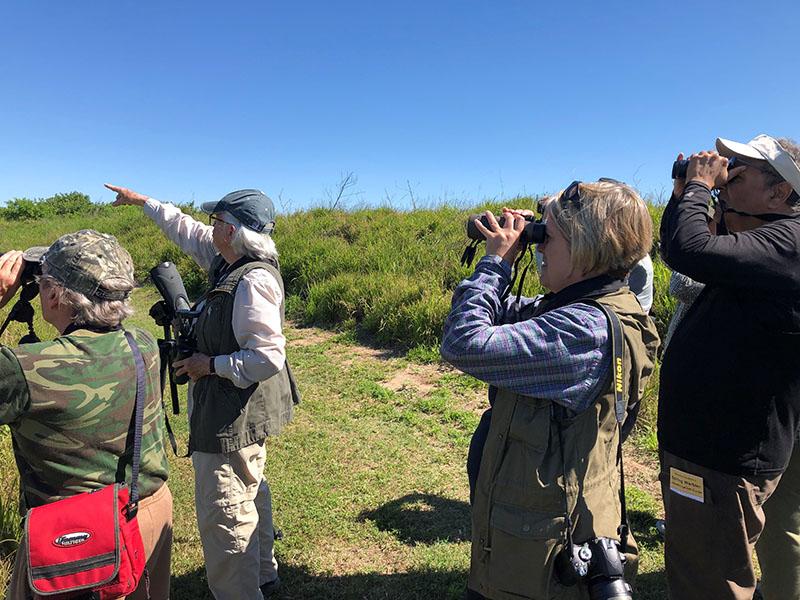 Birders at Texas A&M Wetlands