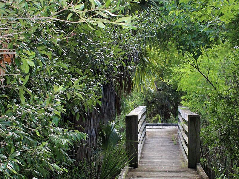 Corp Woods Birding Trail Bridge