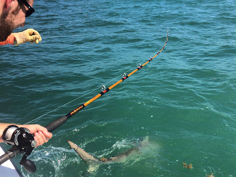 Man on Boat Reeling in a Shark
