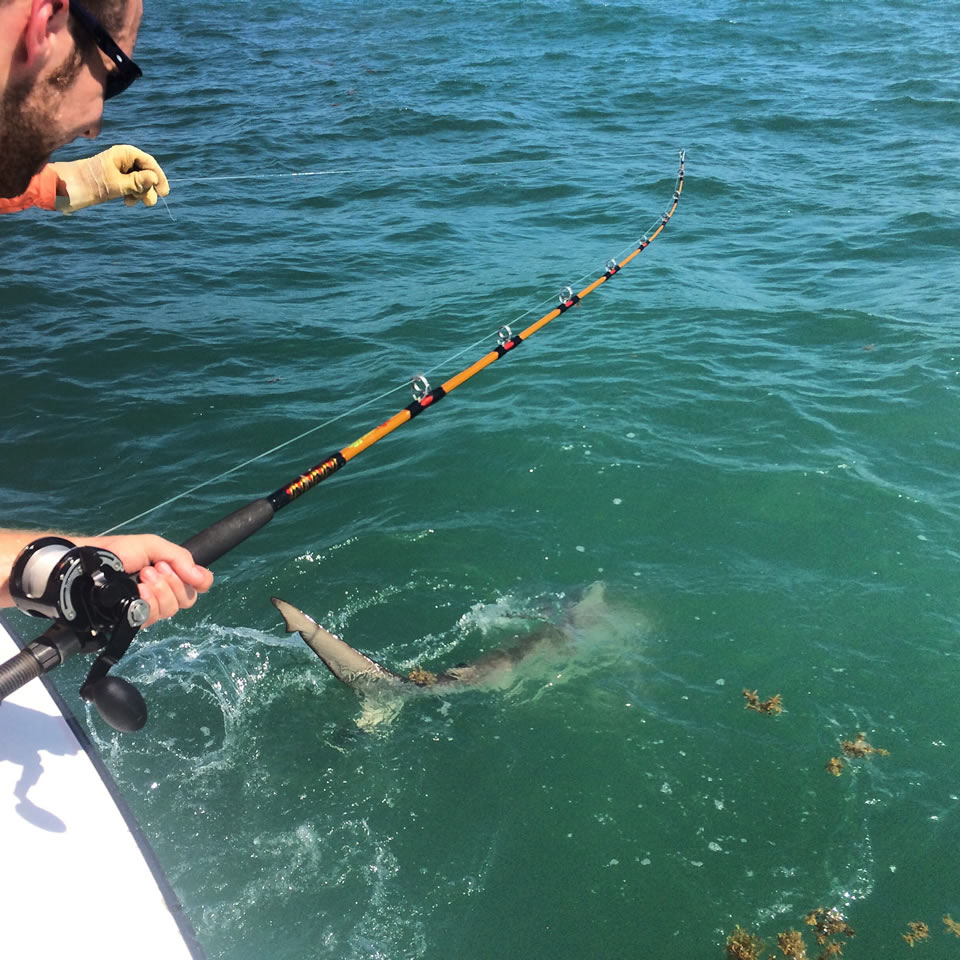 Man on Boat Reeling In Shark
