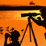 Birding on Galveston Island