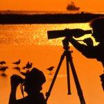 Birding on Galveston Island
