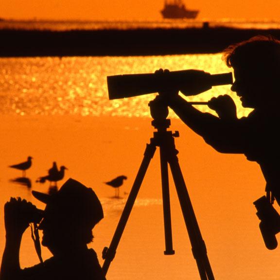 Birders on Galveston Island, Galveston, TX
