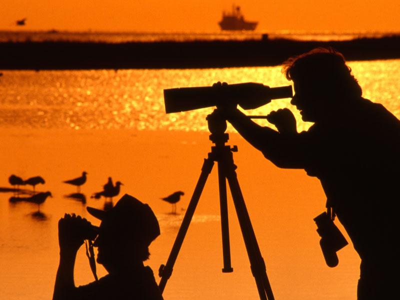 Birders on Galveston Island