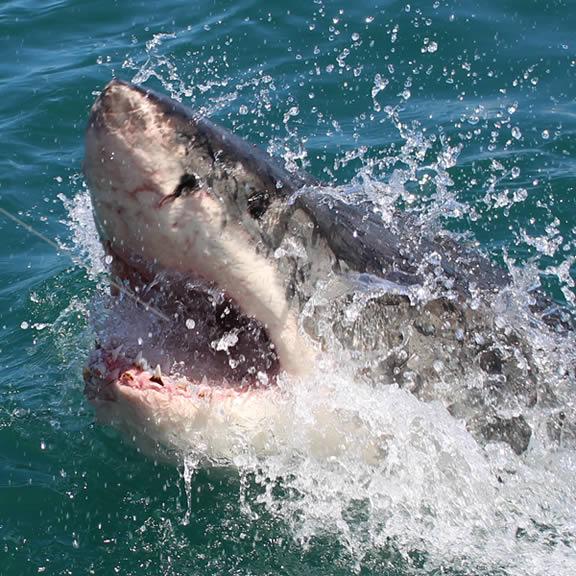 Galveston Sport Fishing Charters, Galveston Tx