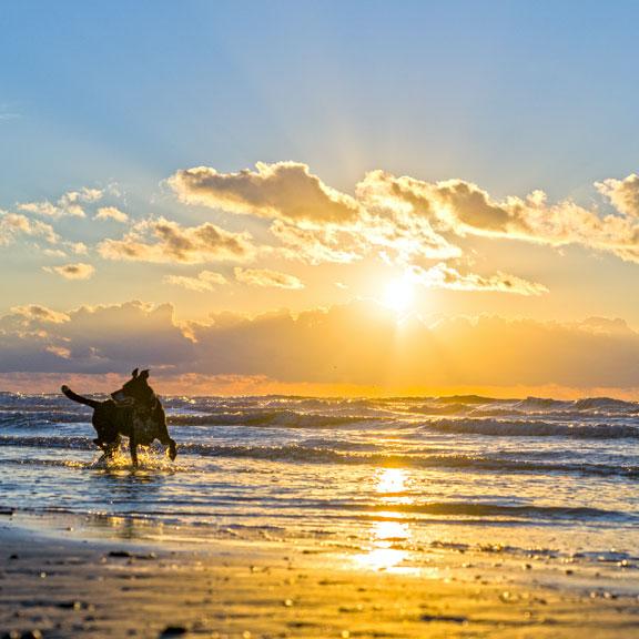 Dog Playing on the Beach at Pocket Park 2, Galveston TX