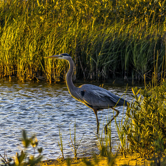 Bird at Galveston Island State Park, Galveston TX