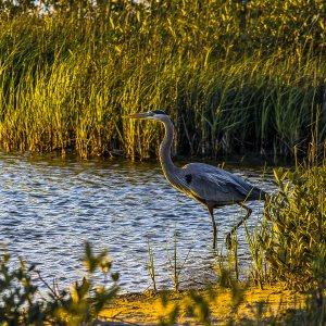 Bird at Galveston Island State Park