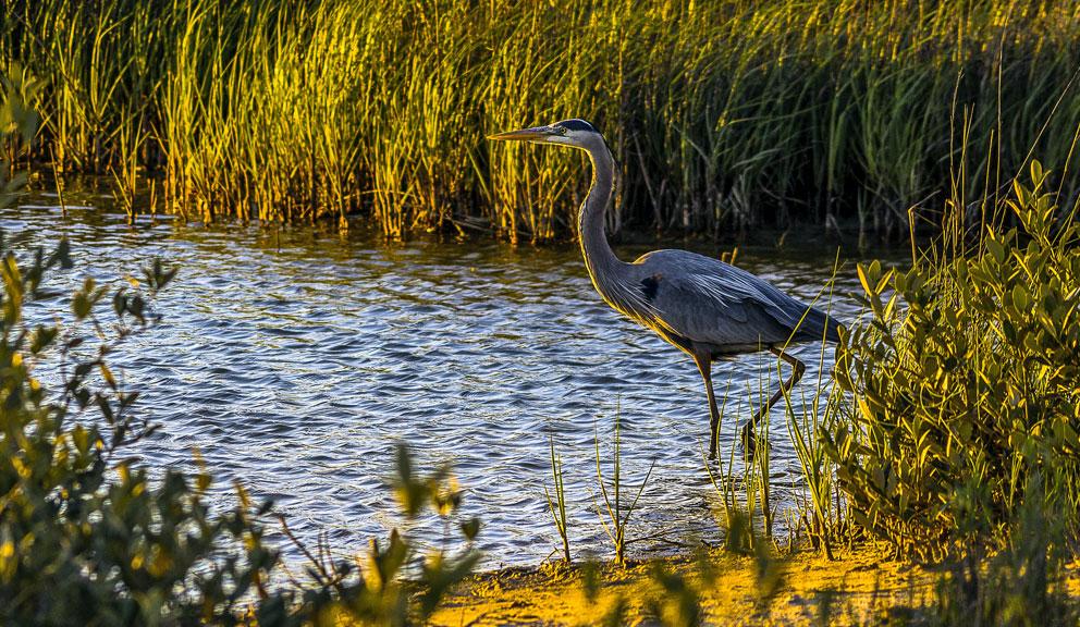 Bird at Galveston Island State Park, Galveston