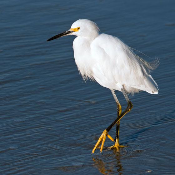 Birding Galveston Island