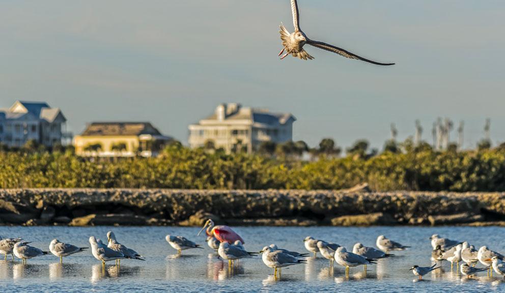 Gary Greene Vacation Rentals, Galveston TX