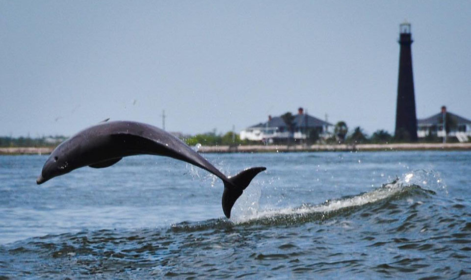 Dolphin Jumping by Bolivar Lighthouse