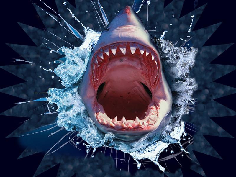 Shark-Attack-5D-Theater