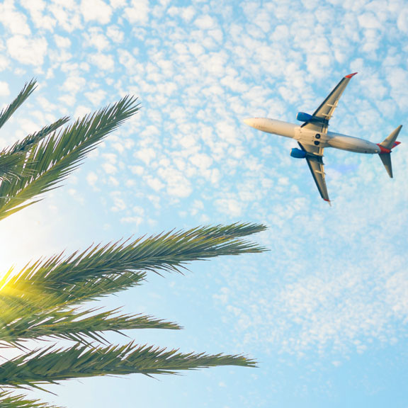 Commercial Plane Flying Over a Palm Tree