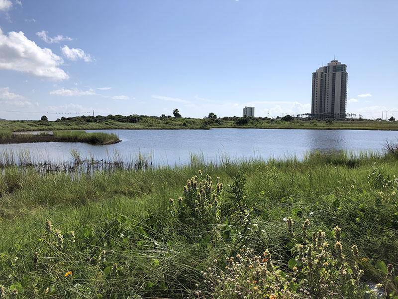 Appfel Park Road Pond