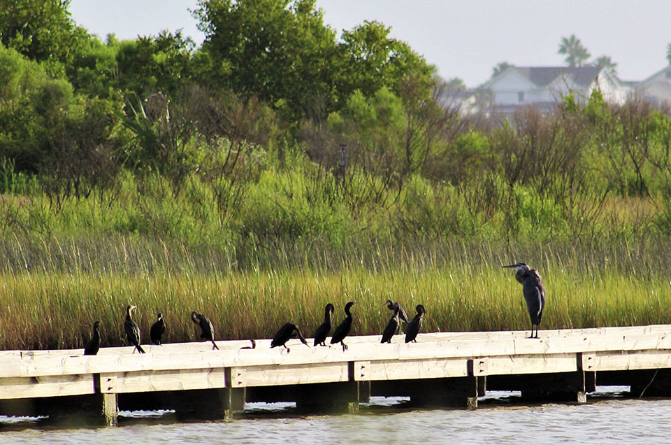 Birds on Foot Bridge