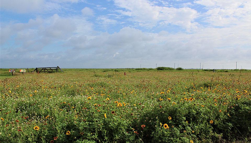 Coastal Heritage Preserve Prairie
