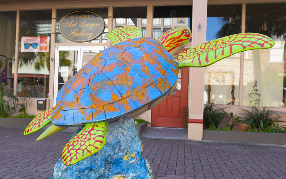 Sargasso Susan The Turtle