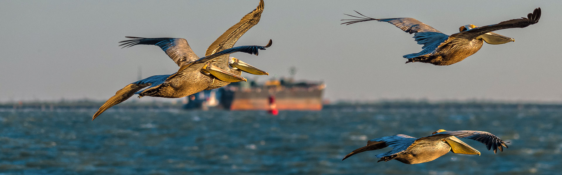 Tanker with Pelicans