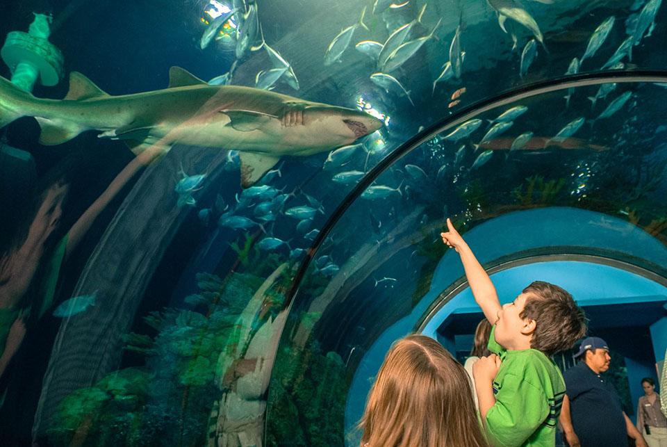 Kids at Moody Gardens Aquarium