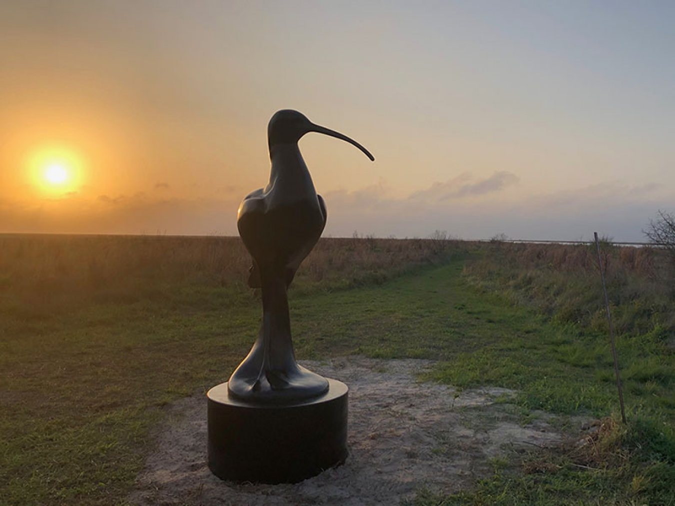 Eskimo Curlew at Sunset