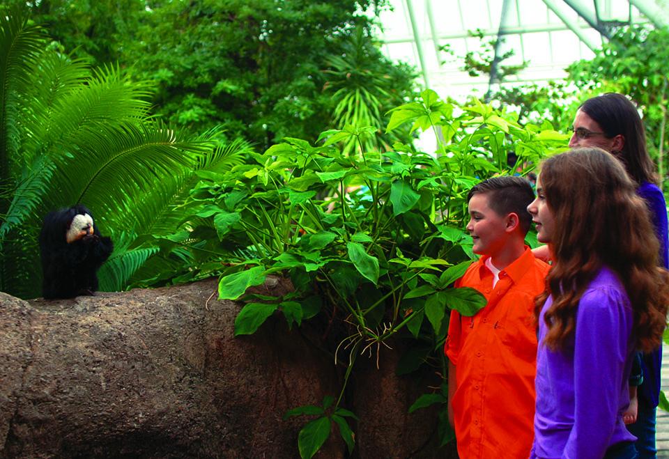 Saki and Kids in Rainforest Pyramid