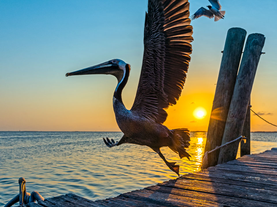 How to Spread Your Wings on Galveston Island