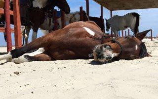 Galveston Island Horse and Pony Rides