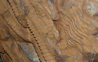 Fossil Galaxy