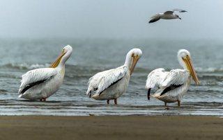 Birds Along the Beach