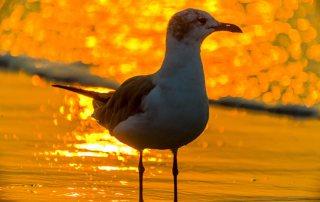 Morning Seagull