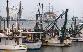 Tall Ship ELISSA & Fishing Boats