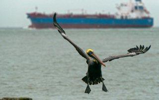 Tanker Arriving to Port of Galveston