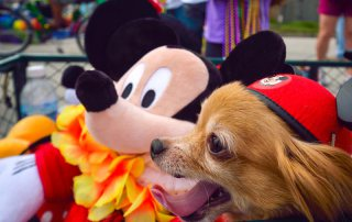 Pet Parade at Mardi Gras