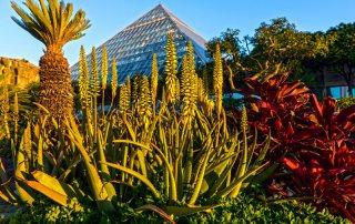 Moody Gardens Rainforest Pyramid