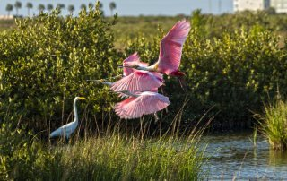 Beautiful Birds Enjoying Galveston Wetlands