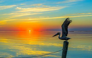 A Pelican Takes Wing