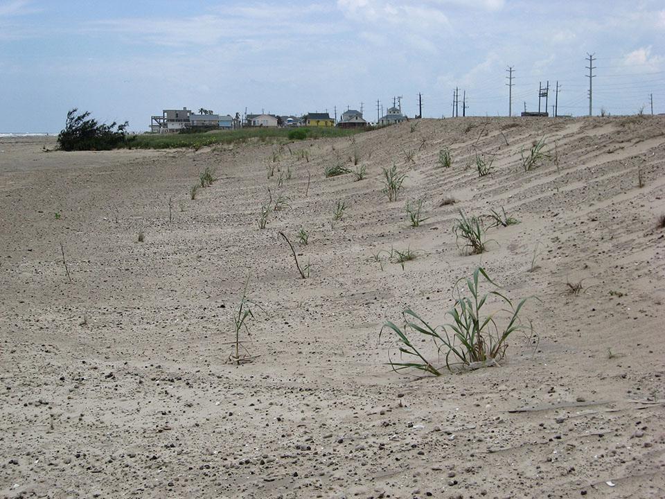 Galveston Island State Park eight months post-Ike