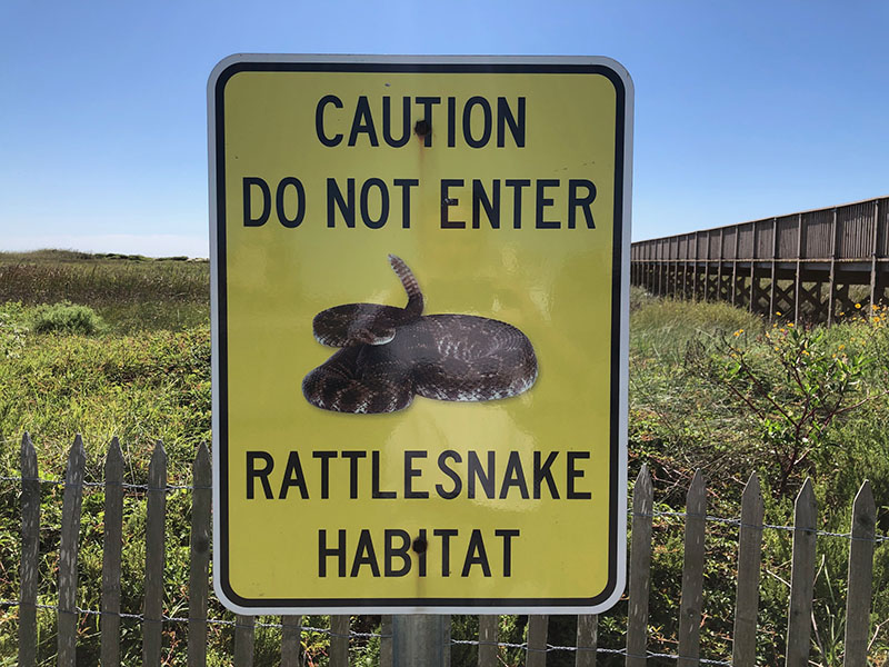 Point West Boardwalk to Beach - Rattlesnake Warning Sign