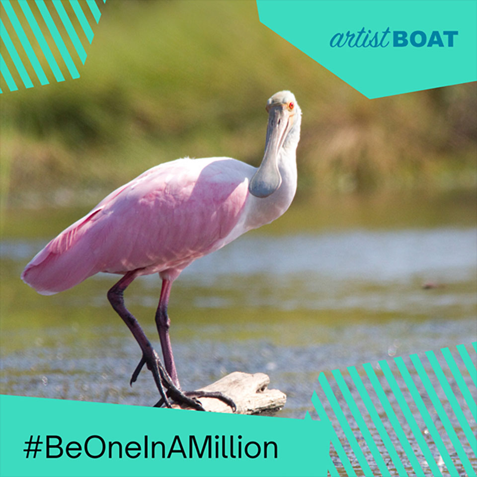 Roseate Spoonbill Graphic for Be One In A Million