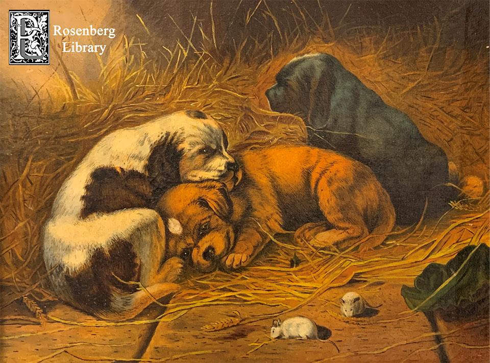 Three Puppies by Maria C Kimball