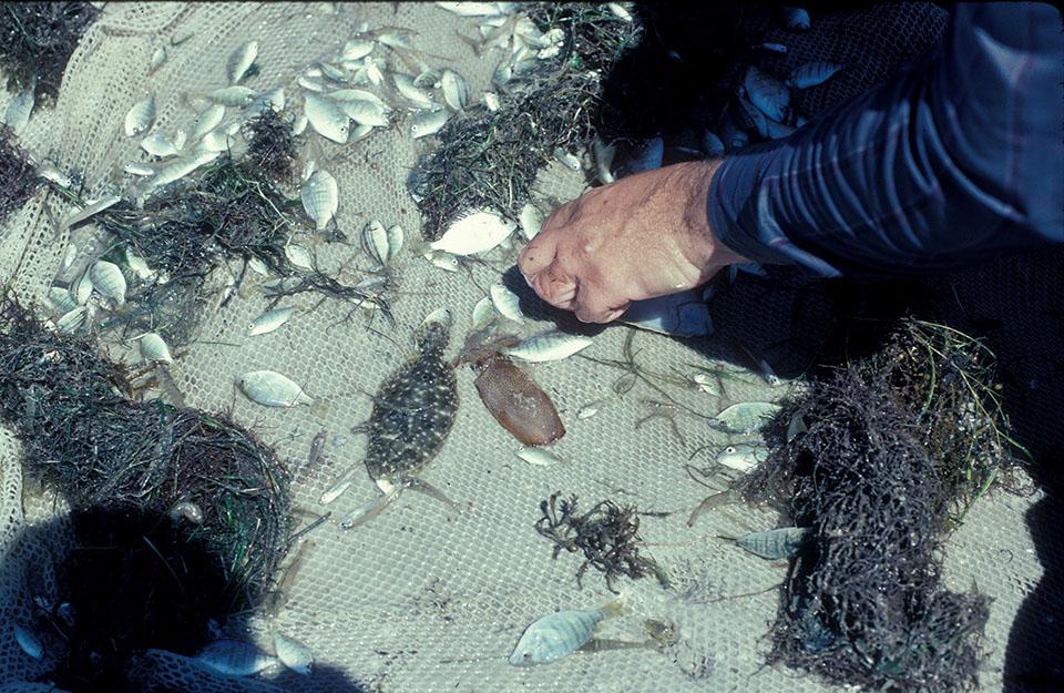 Bird Prey Items From Salt Marsh Shorelines