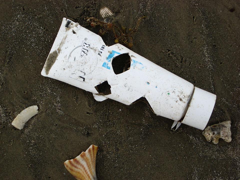 Sea Turtle Bites on Plastic Tube